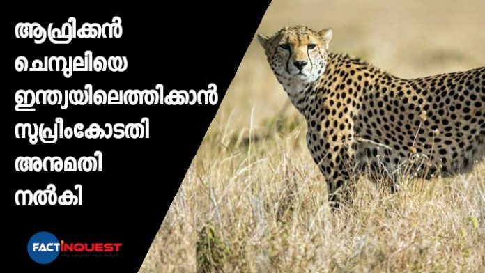 The Supreme Court allows Centre to bring African cheetah to suitable wildlife habitat in India