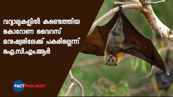 virus found in bats are not causing covid says ICMR
