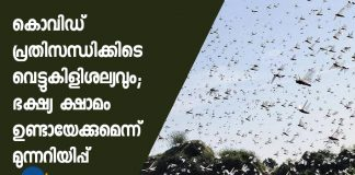 Locust swarm invasion warnings issued for Punjab, Haryana, govts brace to prevent damages