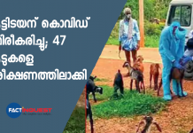 47 goats quarantined after goatherd tests COVID positive in Karnataka