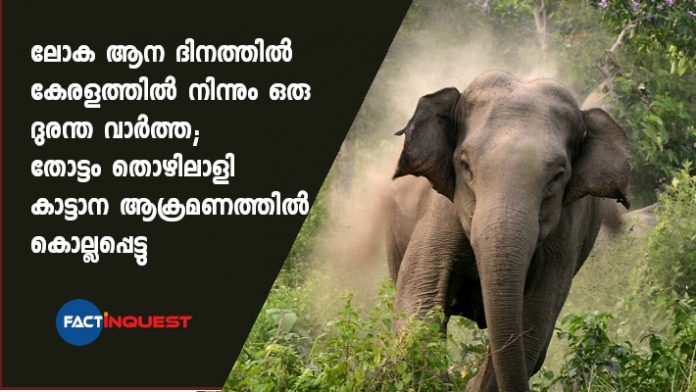 plantation worker killed in an elephant attack on Kerala