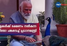 PM Narendra Modi shares video of 'precious moments' feeding peacocks during morning routine of exercises